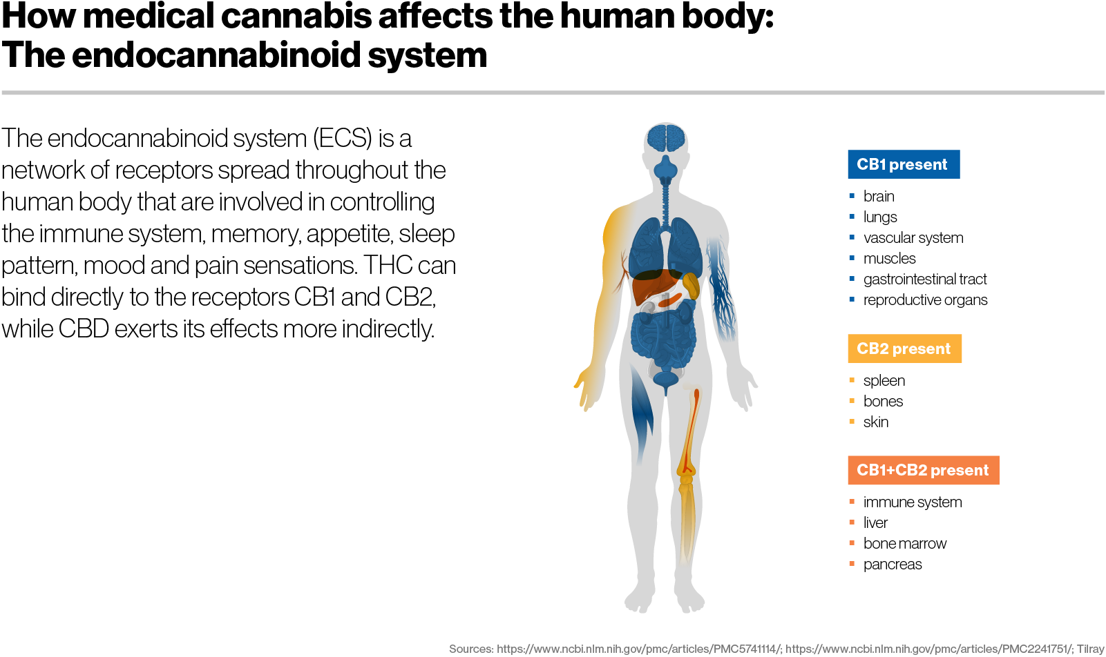 How medical cannabis affects the human body: The endocannabinoid system