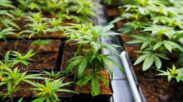 Interview: Medical cannabis is a scientifically reasonable option