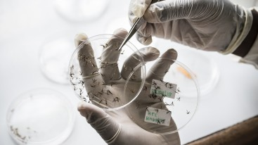Interview: Joint forces against malaria